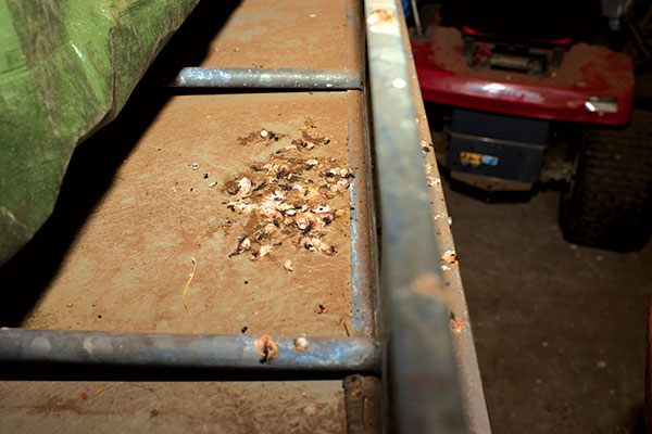 Bird -droppings -damage -on -a -camper -trailer