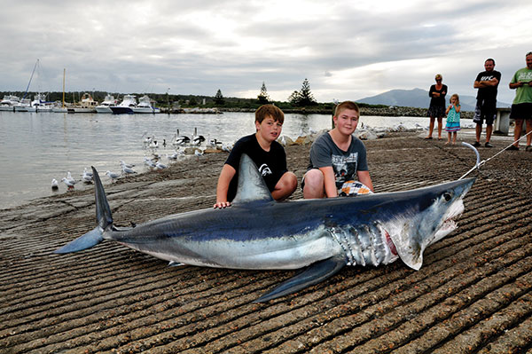 Mako -sharks -at -Bermagui -NSW