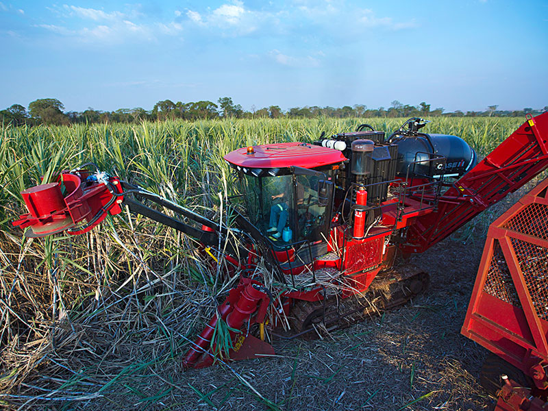 The Case IH Austoft cane harvester working