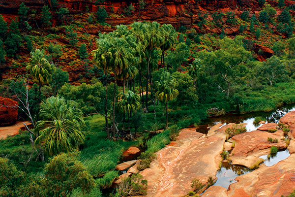 Palm -Valley -West -Mac Donnell -Ranges -NT