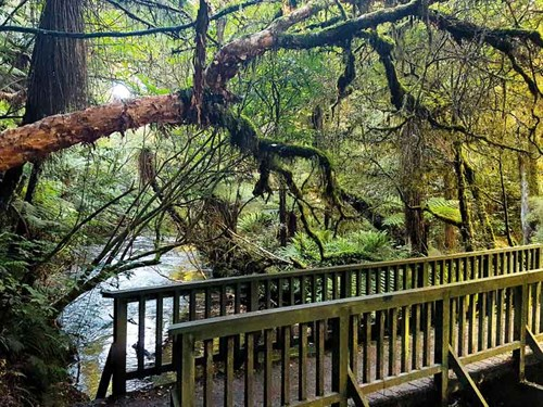The -Catlins -is -full -of -delightful -rainforest -walks