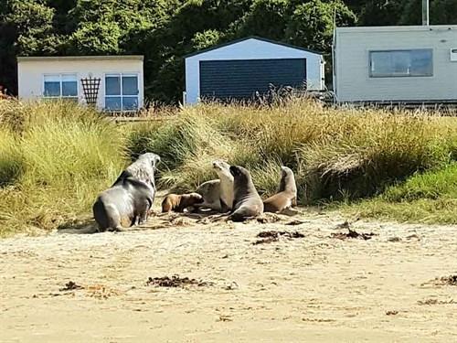 Seal -families -hang -out -happily -at -Jack 's -Bay