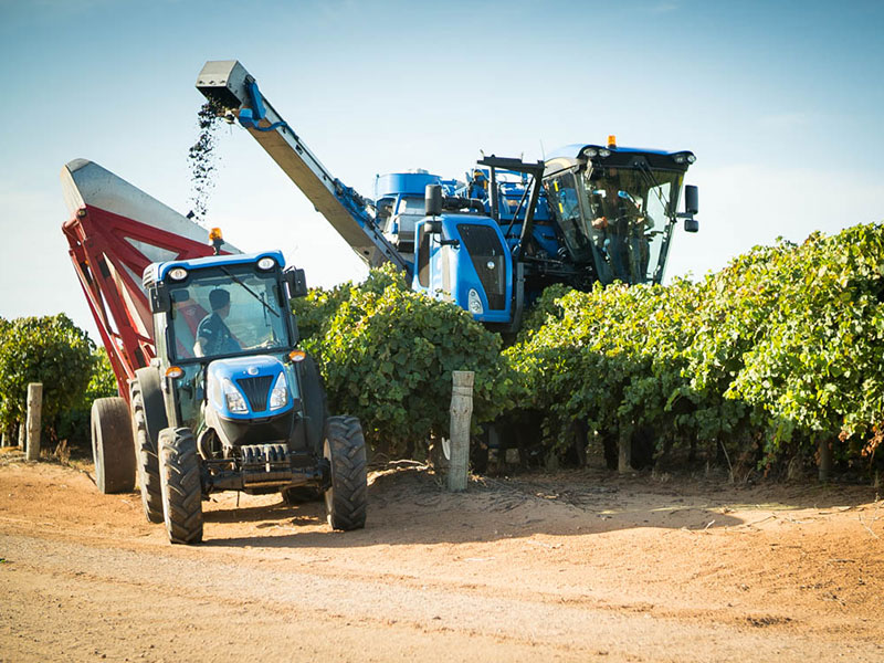 The New Holland Braud 9090X harvesting grapes