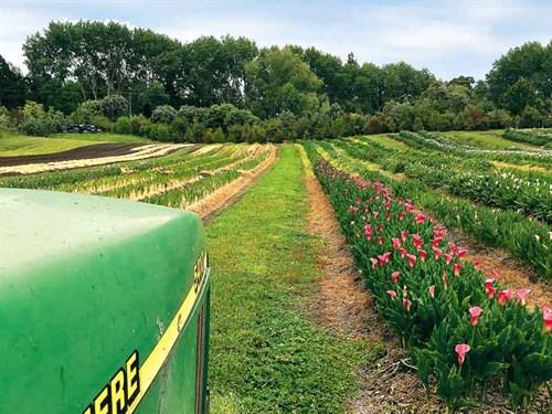Bulb -farming -11