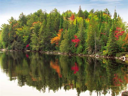 Whelan _1-Autumn -colours -at -Algonquin -Park