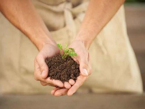 Soil -463581801