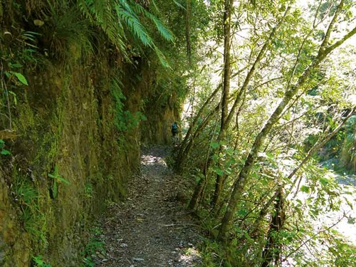 Whelan _15-Pakihi -Trail -winds -through -bush