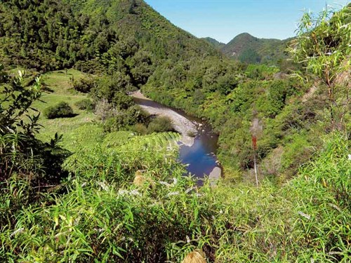Whelan _17-Lush -bush -scenery -on -the -Pakihi -Trail