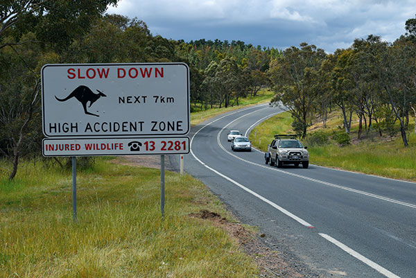 Road -in -the -bush -Slow -Down -sign