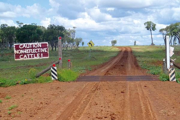 Road -in -the -bush