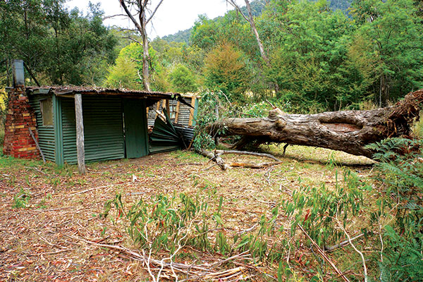 Wombat -PO-hut -and -the -tree -that -partly -destroyed -it