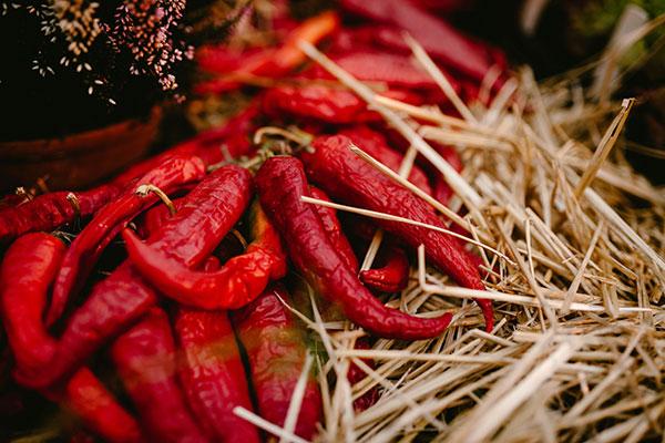 Chilli -festival
