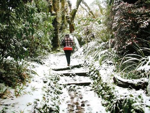 Taranaki -2-The -loop -track -to -and -from -the -Ngati -Ruanui -Stratford -Mountain -House