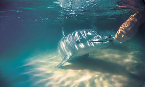 Dolphin Feeding 3