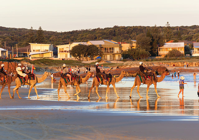 Camel Rides On Stockton Beach