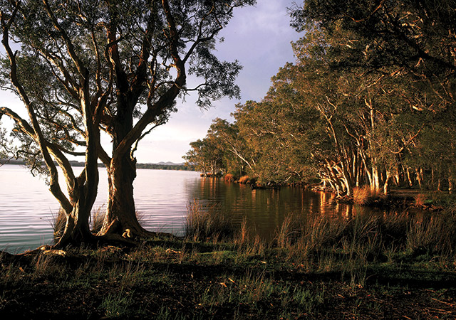 Trees And Water At Myall Lakes