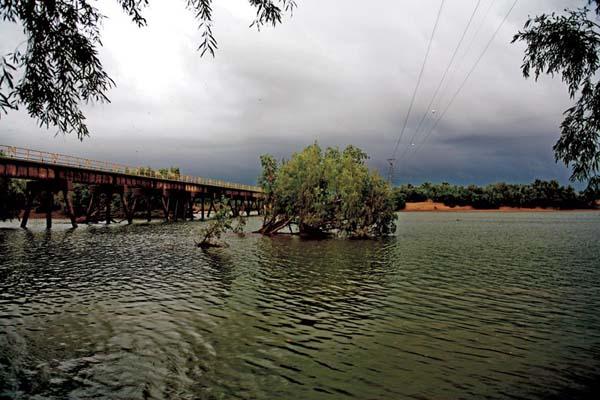 Tree Fallen In The De Grey River