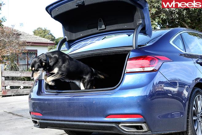 Hyundai -Genesis -boot -dog