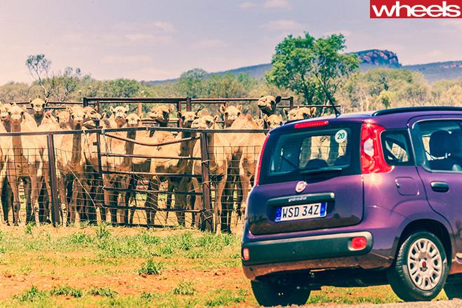 Fiat -Panda -with -Llamas