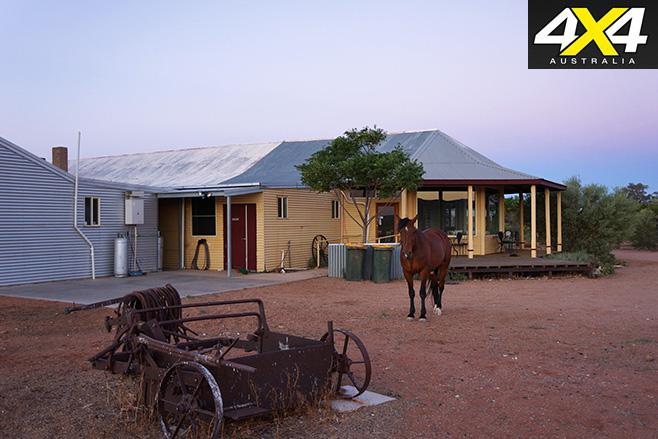 Horse at Eldee Station
