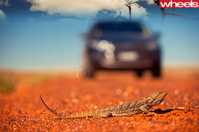 2011-Ford -Territory -with -gecko