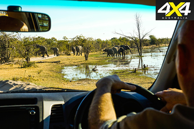 Watching -out -for -elephants