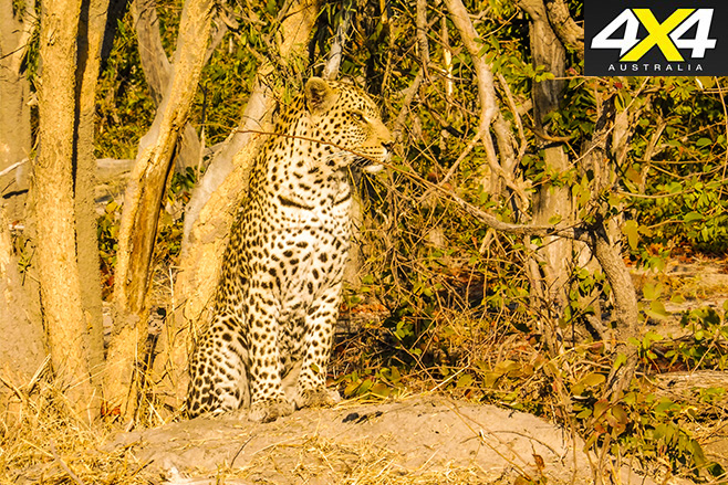 The -girls -leopard