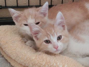 Ozzy and Butter as kittens.
