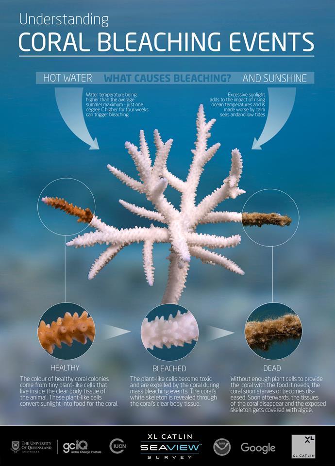 Credit: The Ocean Agency / XL Catlin Seaview Survey