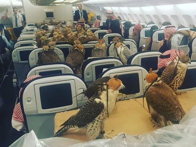 Reddit user lensoo posted this photo showing 80 falcons each with their own seat.
