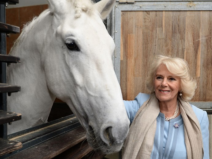 Meanwhile, Camilla takes a moment to pat and feed the horses during a visit to the Spanish Riding School in Vienna.