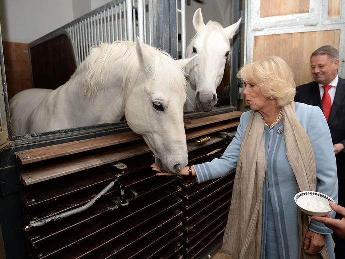 Horses hold a dear place in the hearts of the royal family.