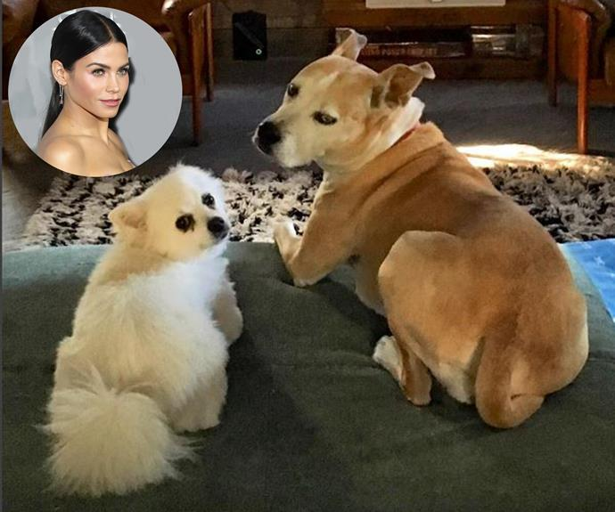 "We all love our [dogs](http://www.nowtolove.com.au/lifestyle/pets/top-100-dog-names-32947) but Jenna Dewan Tatum's might just be the most spoilt pups yet. She admits her 9-year-old miniature Japanese spitz Meeka [left] gets facials every six weeks! ""Meeka goes to the spa and gets a blueberry facial"" she told [PEOPLE](http://people.com/pets/jenna-dewan-tatum-dog-gets-blueberry-facials/). ""She gets kind of poofy, and then we have to go get her groomed, so [she gets a facial] once every six weeks, kind of like me."""