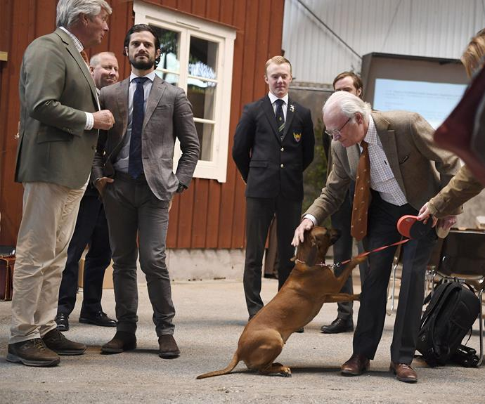 His father King Carl Gustaf took his furry bestie, dog Brandie, along to the event.