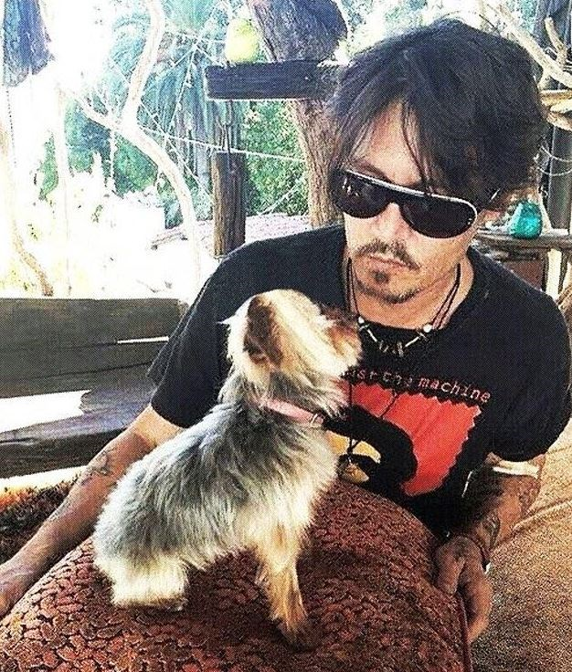 Depp pictured with one of the pups, a teacup Yorkshire Terrier.