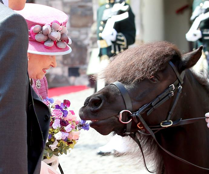 Her Majesty was in giggles over the cheeky pony.