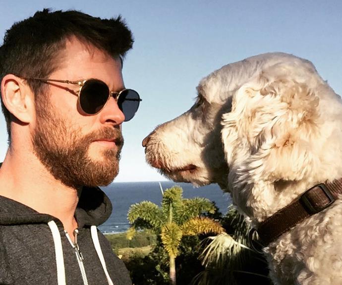 **Pet Goals:**  One photo wasn't enough…
