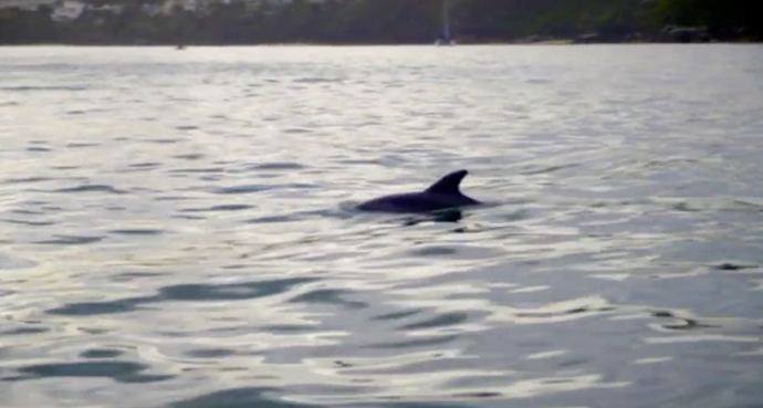 Fun Fact - This dolphin was also an extra on Flipper