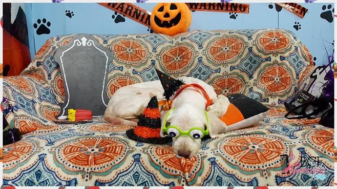 Lucky in Halloween garb