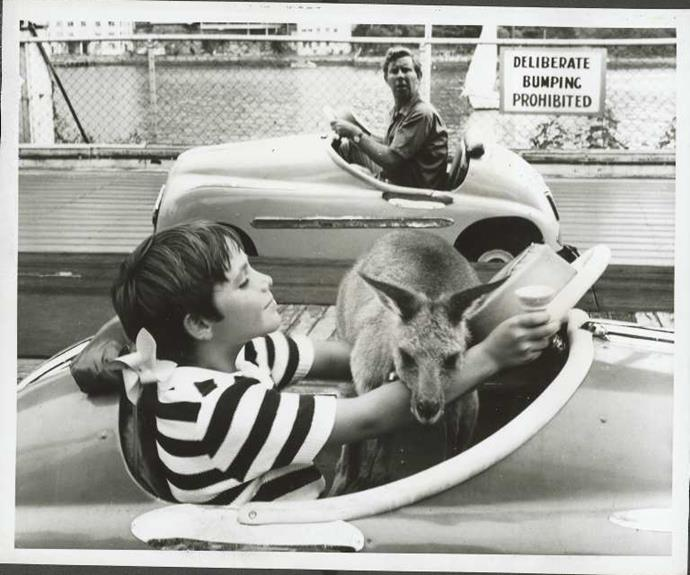 **1968:** A marsupial became one of TV's biggest stars with the premiere of *Skippy The Bush Kangaroo*. The family favourite followed Sonny (Garry Pankhurst) and his pet kangaroo. Skippy soon became a worldwide hit.