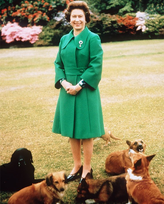The Queen's corgis are big fans of Meghan.