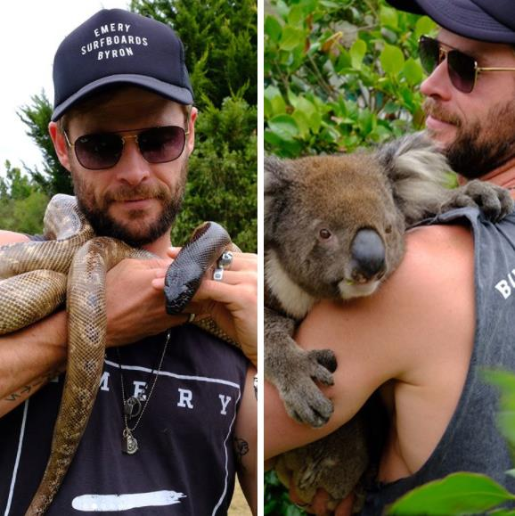 Chris enjoyed cuddles from Australia's cutest and creepiest natives while on the family holiday of dreams.
