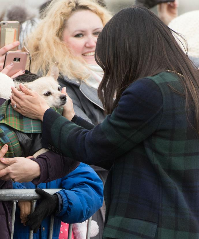The duchess-to-be, an animal lover, was pictured giving a particularly lucky pooch lots of attention.