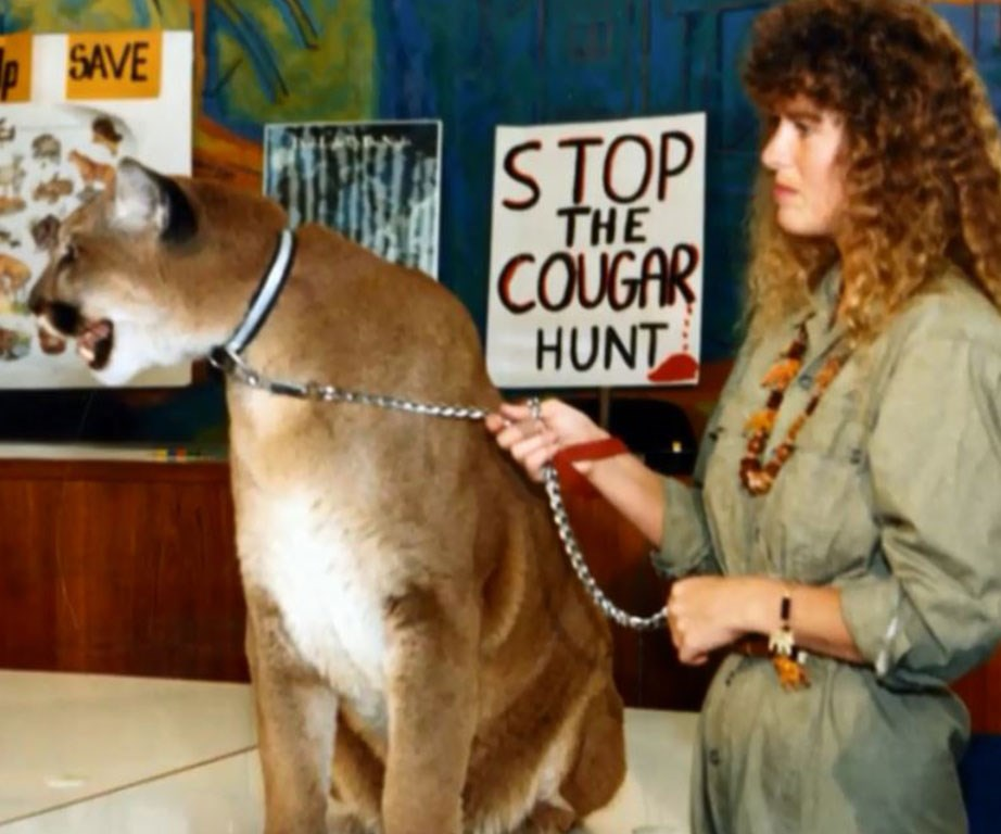 Terri set up an organisation to protect cougars, Cougar Country.