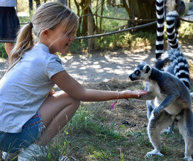 Princess Josephine, seven, feeds a friendly lemur at the safari park.