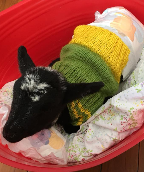 Your knitted jumpers will help save lambs from harsh drought conditions.