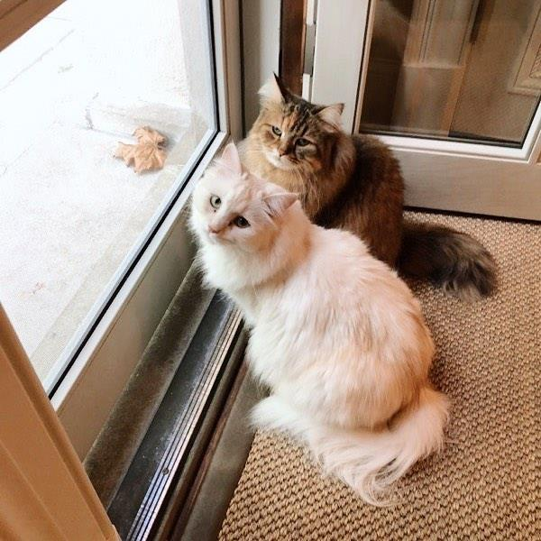 Nicole Kidman's cats Queen Snow and Ginger.
