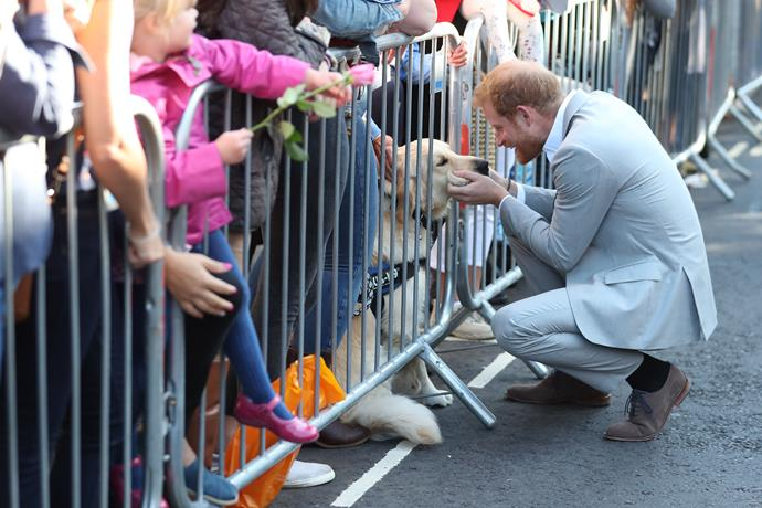 It wasn't just humans that turned out to see Harry and Meghan!