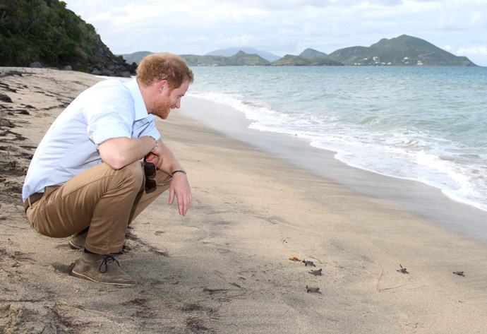 The royals are headed to Bondi Beach! We're imagining it'll be a little busier than this Caribbean location Harry visited in 2016.