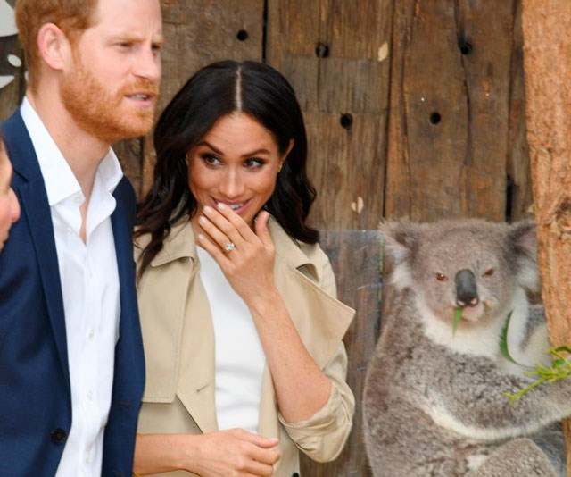 Meghan can't stop giggling - but the koala remains unfazed.